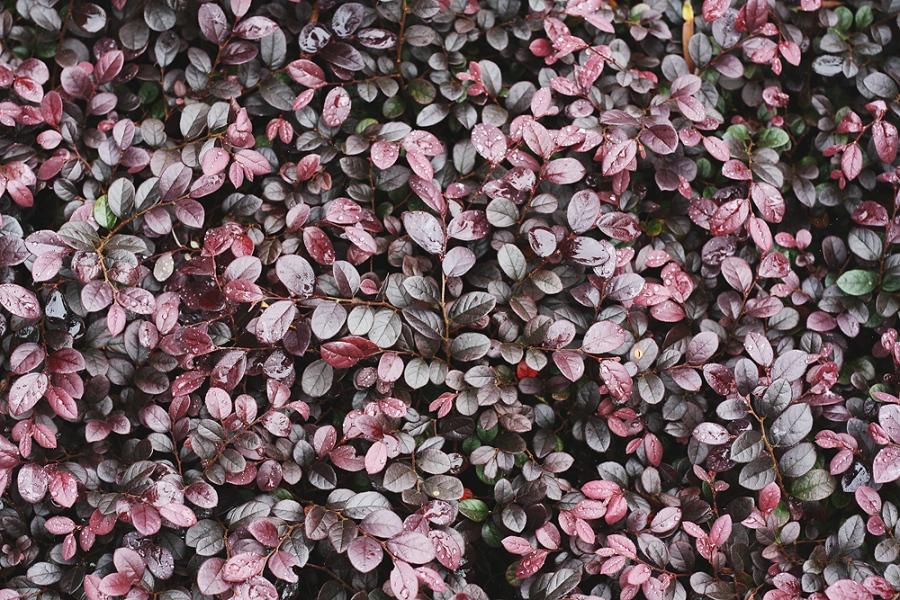 botan-colours1