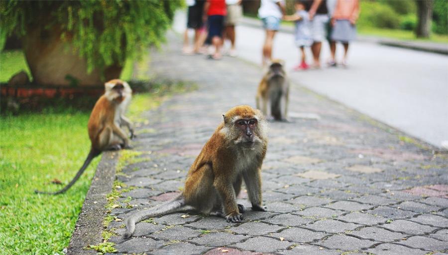 monkey-9
