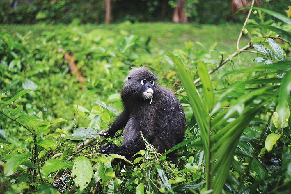 monkey-dude-1