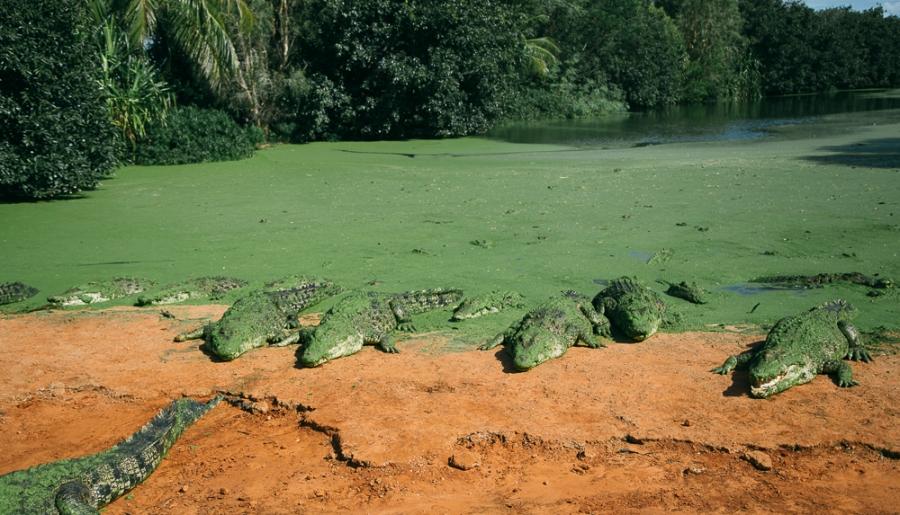 croc-farm-16