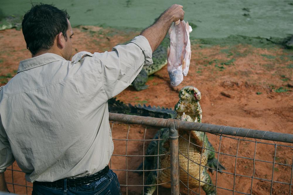 croc-farm-18