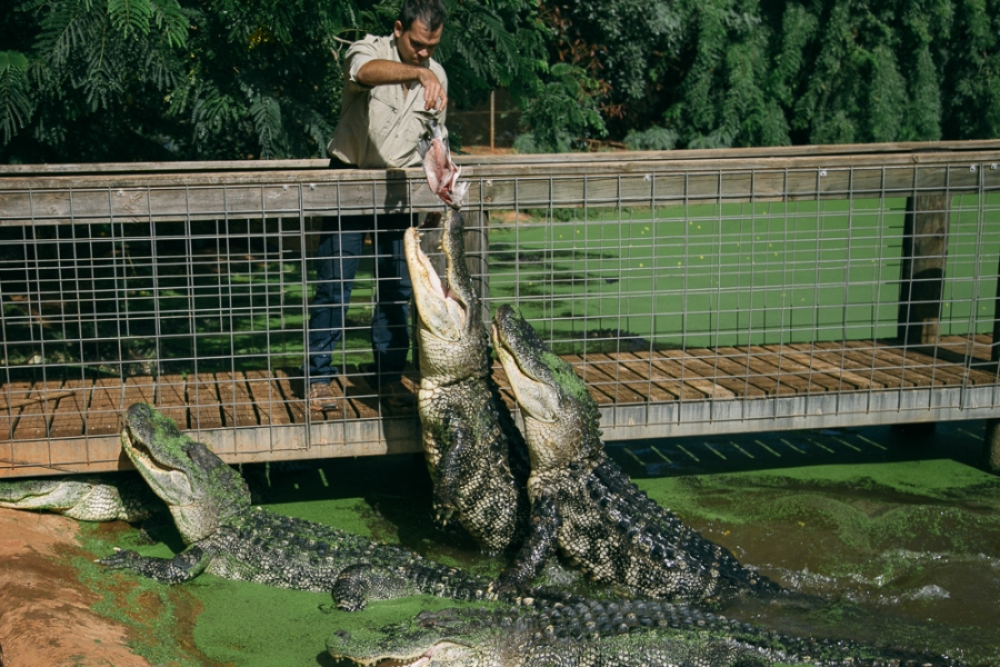 croc-farm-19