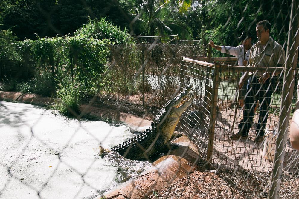 croc-farm-22