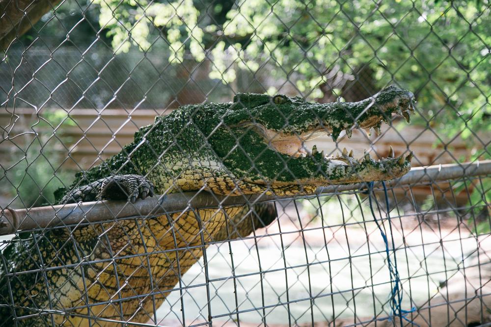 croc-farm-23