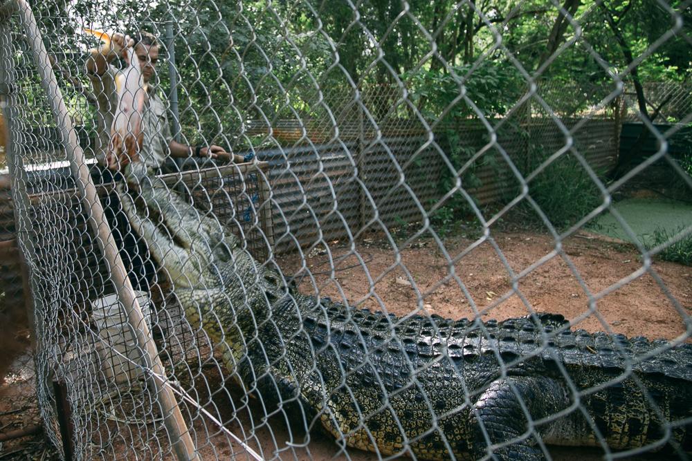 croc-farm-24