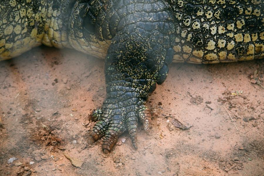 croc-farm-26