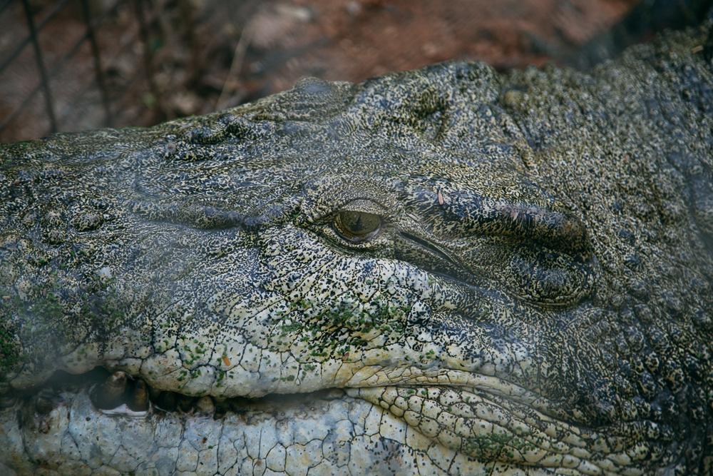 croc-farm-27