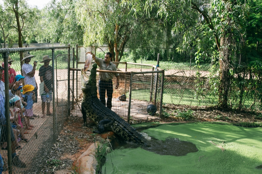 croc-farm-29