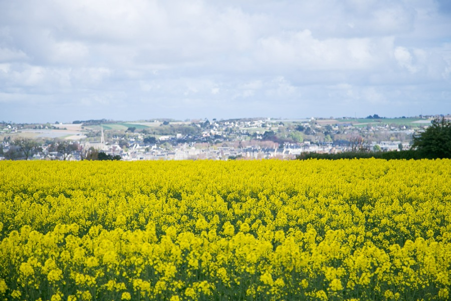 brittany-countryside-11