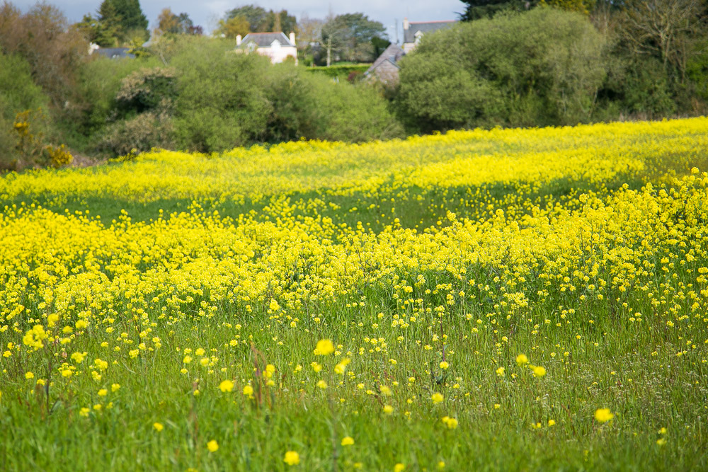 brittany-countryside-2