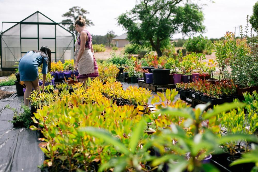 yelverton-protea-farm-1