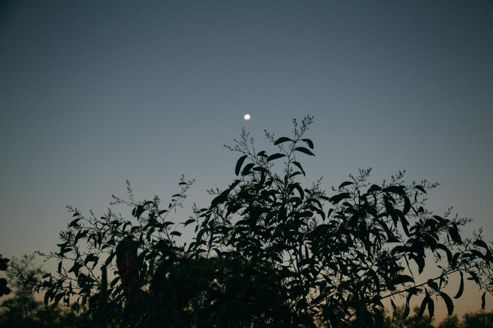 broome-2014-16